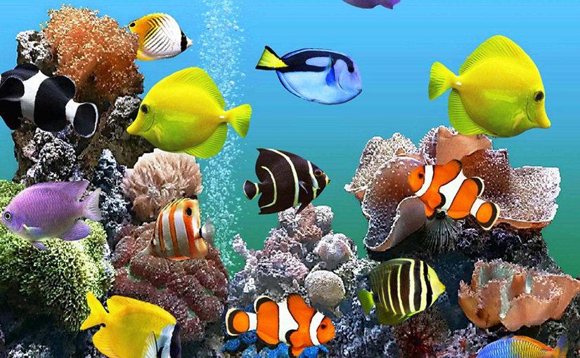 Top 5 des meilleurs aquariums 2020